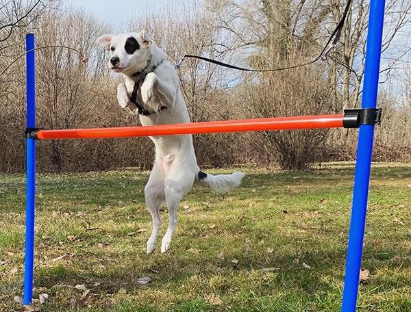 addestramento cani Milano prezzi