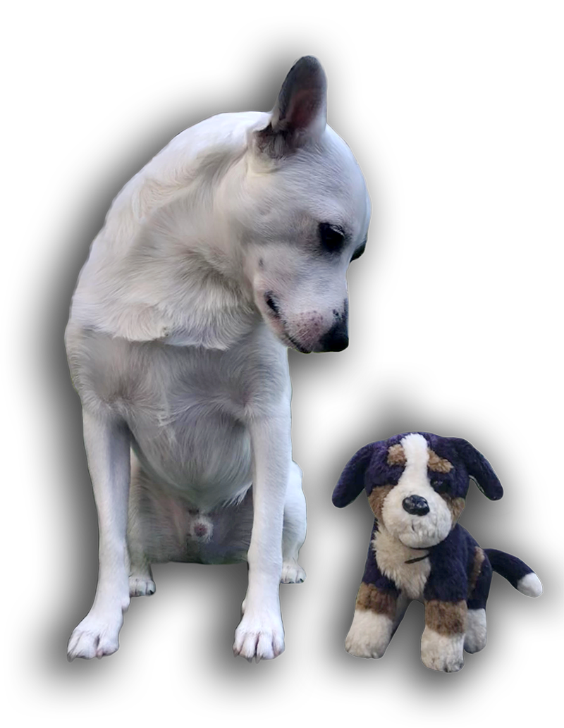 Consulenze pre e post adozione PlayDog asd addestramento cani milano