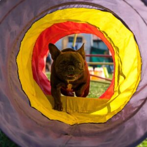 Passeggiata didattica junior edition PlayDog Addestramento cani milano