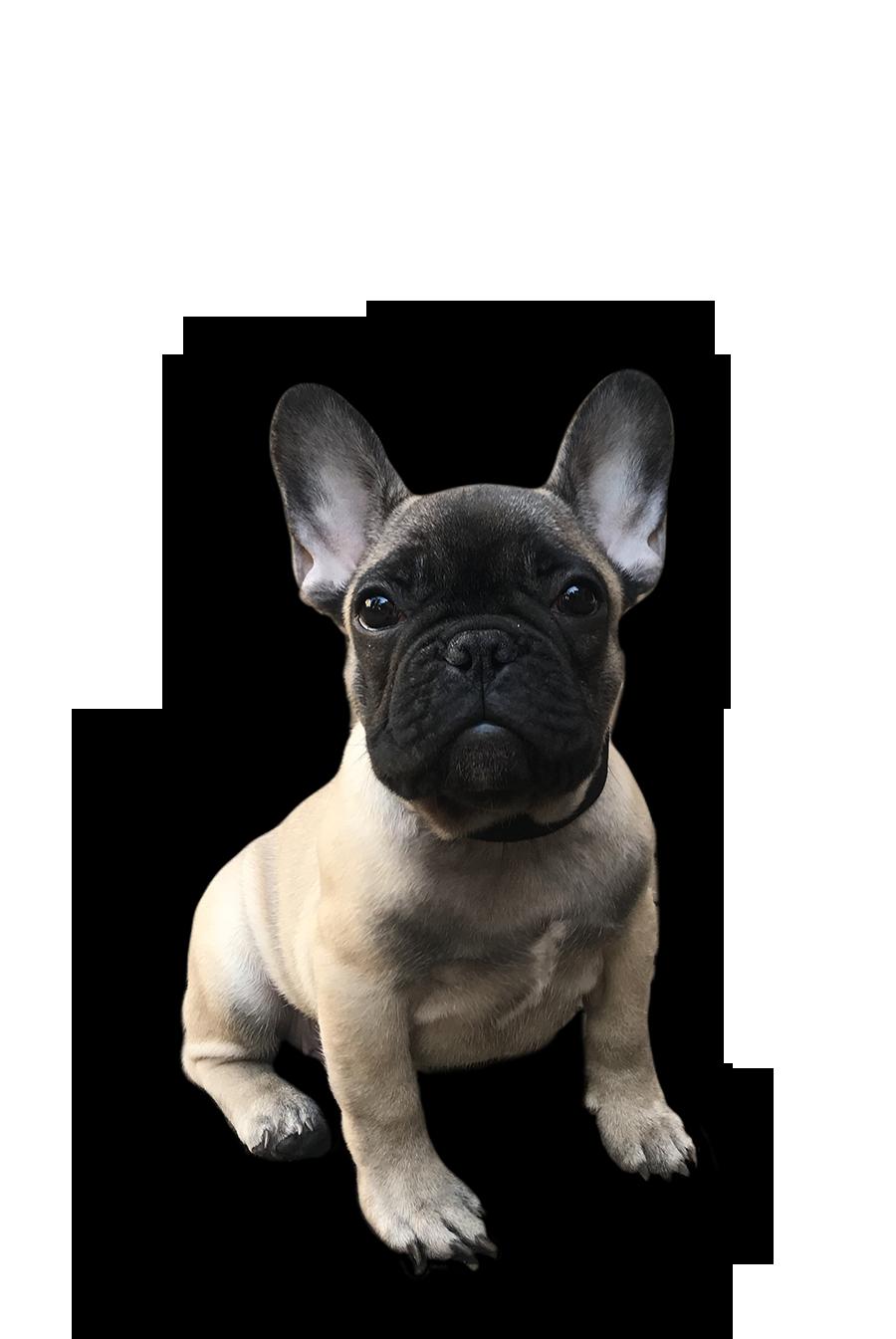 Passeggiate Didattiche PlayDog asd Addestramenti cani milano
