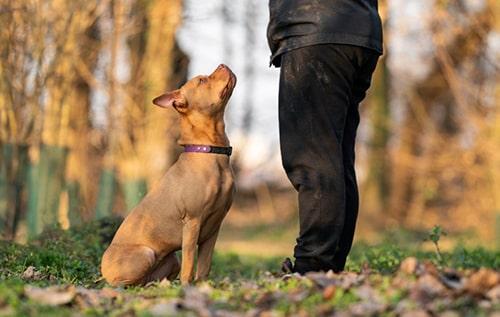 addestramento cane adolescente