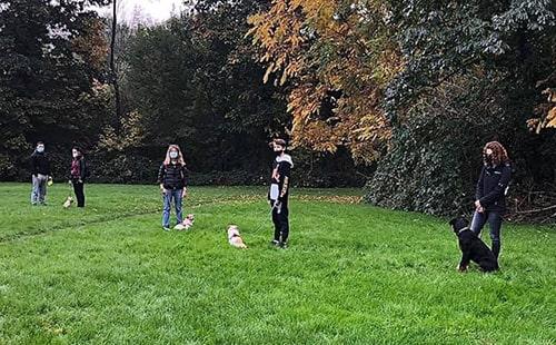 addestramento di gruppo cani