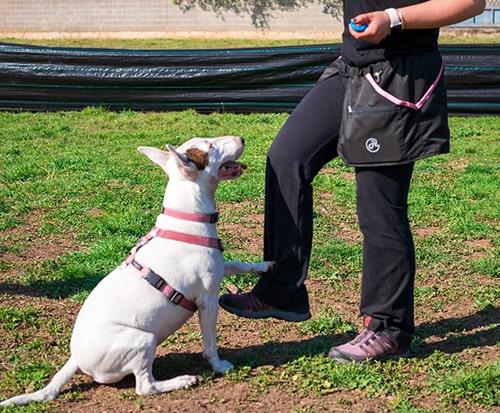 clicker training PlayDog asd Addestramento cani milano