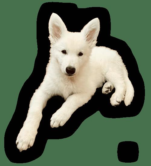 educatore cane cucciolo