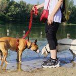 passeggiate didattiche PlayDog asd Addestramento cani Milano