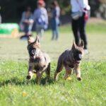 puppy class al parco nord   PlayDog asd Addestramento cani Milano
