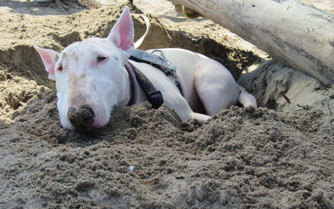 Cane al mare PlayDog Addestramento cani milano