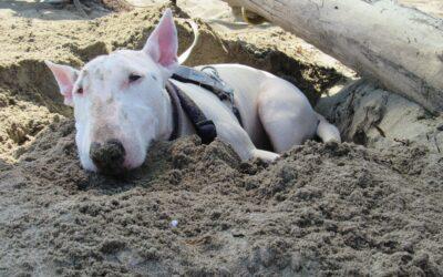 Un'estate a 6 zampe: 5 esperienze meravigliose da condividere con il proprio cane