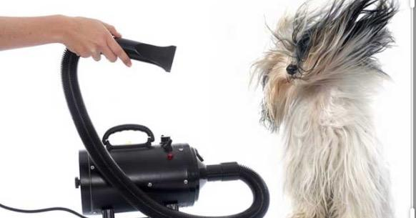 Soffiatore PlayDog Addestramento cani milano