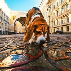 Percorsi di Socializzazione ambientale | Playdog Addestramento cani Milano