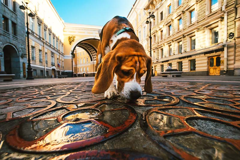 Percorsi di Socializzazione Ambientale   PlayDog Addestramento cani Milano.jpeg