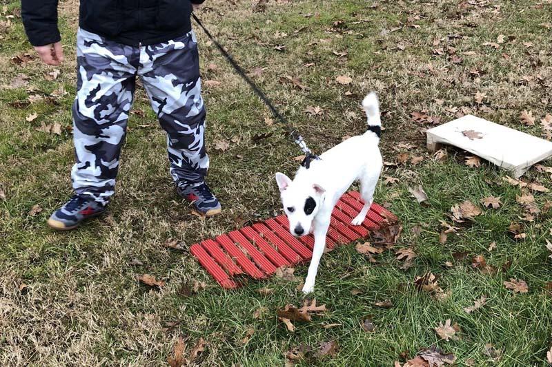 Percorsi di Socializzazione Ambientale - esercizi | PlayDog Addestramento cani Milano.jpeg