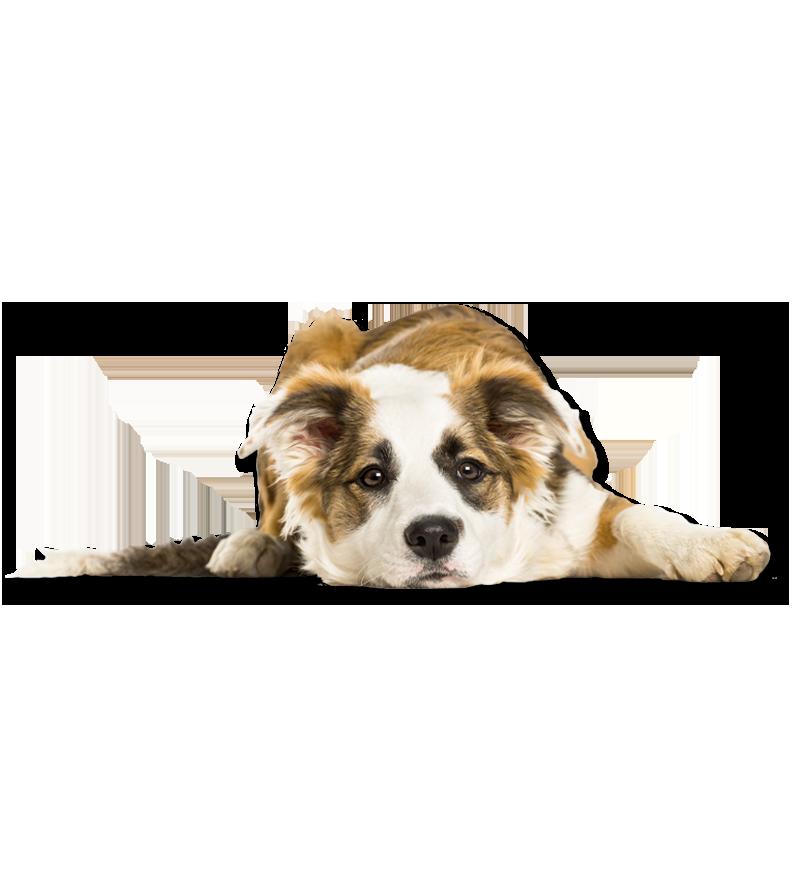 Percorsi-di-Socializzazione-ambientale-_-PlayDog-affestramento-cani-milano